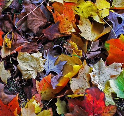 herfstbladeren-intention-academy