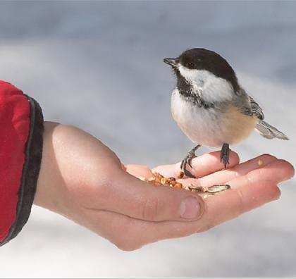 vogel-in-hand-vertrouwen-intention-academy